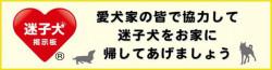 迷子犬の掲示板